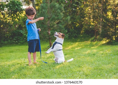 Preschooler kid boy doing dog obedience training classes with his pet