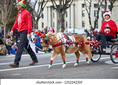 Prescott, Arizona, USA - December 1, 2018: Minature horse pulling a decorated wagon with a woman driving while participating in the Christmas parade in downtown Prescott