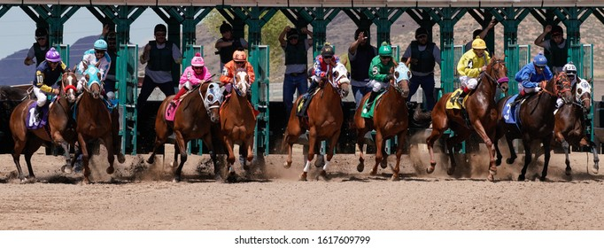 Prescott Valley, Arizona/USA - September 1, 2019 : The field of 9 jockeys and racehorses quickly pick up speed as they clear the gate.