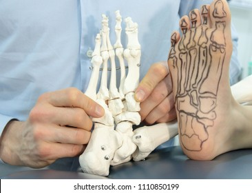 presentation of human foot with drawing of bones on the skin, and model of foot - comparison