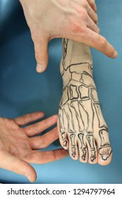 presentation of human foot with drawing of bones on the skin