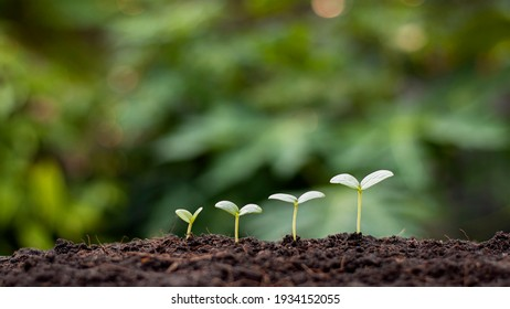 Presentation of plant germination sequence and plant growth concept in suitable external environment.