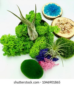 Preserved Moss, colored sands and river stones are popular in micro-landscape crafts and decoration. They provide striking colors and textures to a succulent or air plant terrarium.