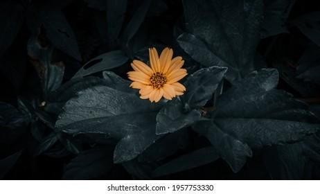 Preset photography: yellow flower preset.🌻
