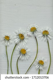 Pressed daisies with a chalk paint white wooden background , A simple flower composition in white , green and yellow