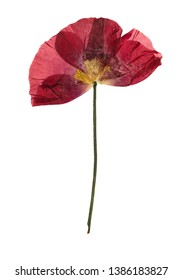 Pressed and dried flower poppy, isolated on white background. For use in scrapbooking, floristry or herbarium.