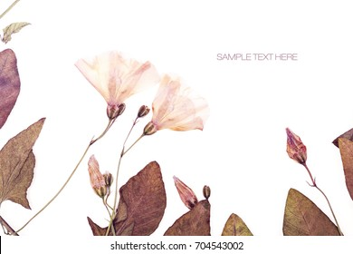 Pressed and dried flowers background