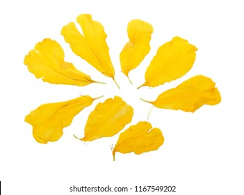 Pressed and dried petal flowers marigold, isolated on white background. For use in scrapbooking, floristry or herbarium.