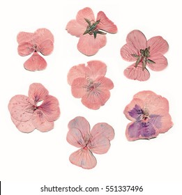 Pressed and dried pink flowers. Scanned image, isolated objects on white background