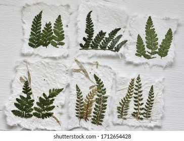 Pressed ferns on handmade paper on a white wooden background .  Torn paper displaying natural green leaves , a nature inspired hobby , used for scrapbooking and journaling