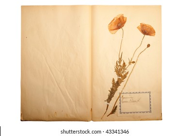 Flower Pressed Paper Stock Photos Images Photography Shutterstock