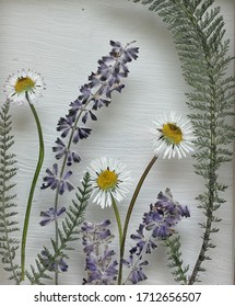 Pressed flowers and leaves in glass with a white wooden background . Daisies and lavender in a summer garden natural arrangement .