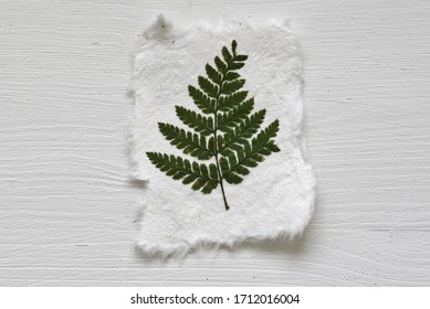 A pressed green fern on handmade paper with a white wooden background . A nature inspired simple composition