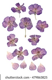 Pressed  purple geranium set perspective. Dry delicate  isolated flowers and petals