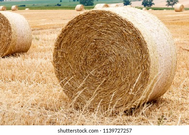 pressed straw bales on a field