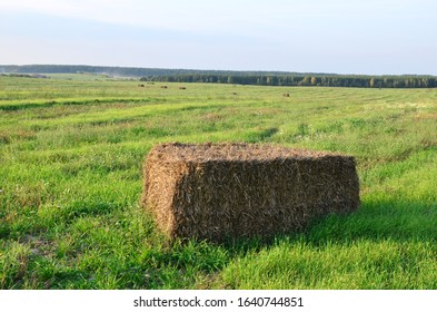Pressed straw briquettes of harvest on a field. Harvesting dry grass for agriculture or farmer. Ecological fuel in straw briquettes. Biofuel production from agricultural residues