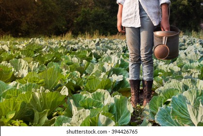 preteen girl watering cabbage field