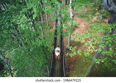 Preteen kid boy and little preschool girl walking on high tree-canopy trail with wooden walkway and ropeway. Happy active siblings children exploring treetop path. Funny activity for families outdoors
