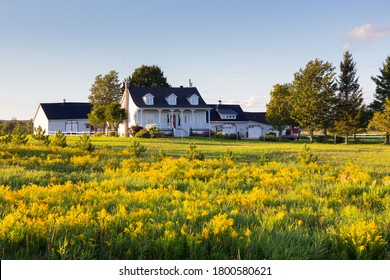 Pretty ancestral neoclassical patrimonial country house surrounded by barns seen across a field of Canadian Goldenrod in St-Augustin-de-Desmaures, Quebec, Canada