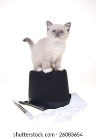 Pretty beautiful Ragdoll kitten standing on top of black top hat with white gloves, isolated on white