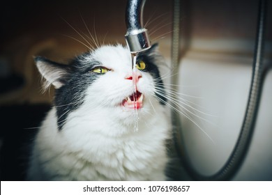 Pretty black and white cat watching the water from the tap in a bathroom
