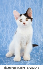 Pretty black and white kitten on blue background