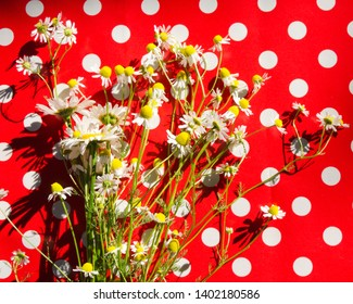 Pretty bouquet of mayweed on the polka dot surface. Rustic style