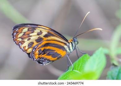 Pretty butterfly Captured In A Uk Farm
