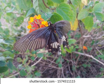 pretty butterfly eating  on flower