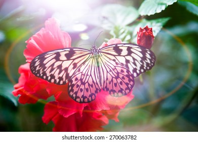 Pretty Butterfly on Flower in Pinks and Reds with Gorgeous Ray of Sun