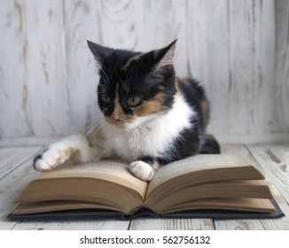 Pretty calico cat reading a book. Cat scientist with book. young cat leafing through pages of a book