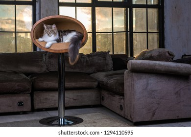 Pretty cat in interior