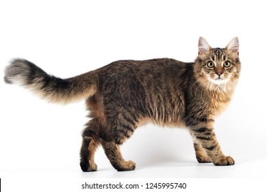Pretty cat mixed breed on white background standing full body