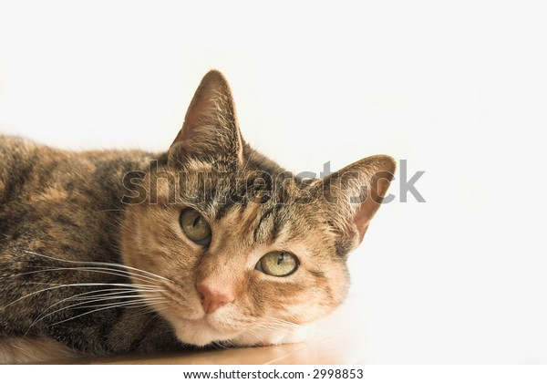 pretty cat on white background