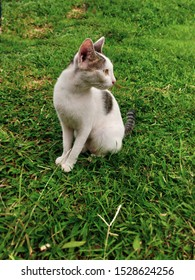 A pretty cat sitting and glancing something in grass garden. Pretty cat sitting on green grass and looking aside at park