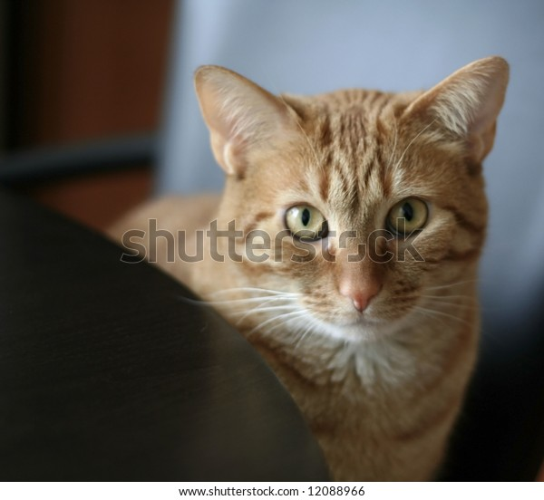 Pretty cat sitting on a chair