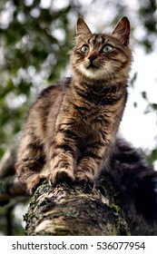 Pretty Cat sitting on a tree branch