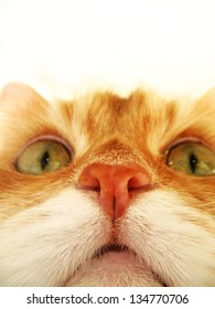 Pretty cat's face on a white background