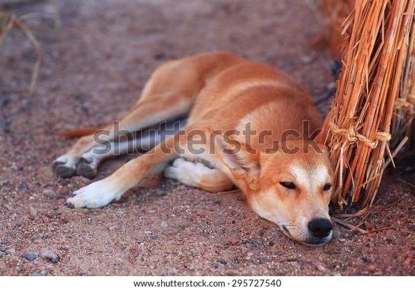 Pretty cheerful mongrel dog outside