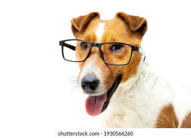 Pretty clever dog stylish reading glasses with black frames. White background