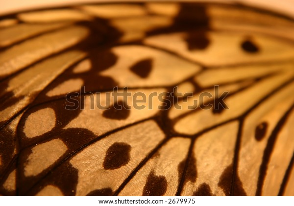 Pretty Closeup of a Wing
