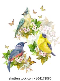 pretty collection of birds on apple blossom and butterflies. watercolor painting