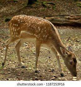 pretty cute bambi deer