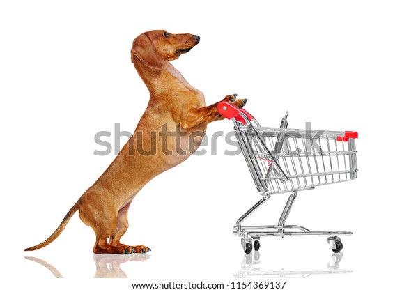 Pretty Dachshund Dog Pushing Shopping Trolley Stock Photo (Edit Now