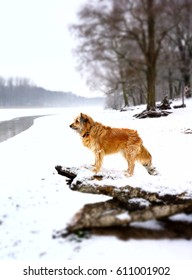 Pretty dog standing on a log looking over a snowy winter landscape