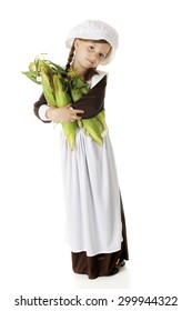 A pretty elementary Pilgrim carrying an armload of fresh corn.  On a white background.