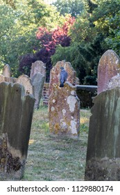 Pretty English village graveyard cemetary with dove bird or pigeon on colorful gravestone. Headstones covered in lichen in a summer churchyard picturesque scene.
