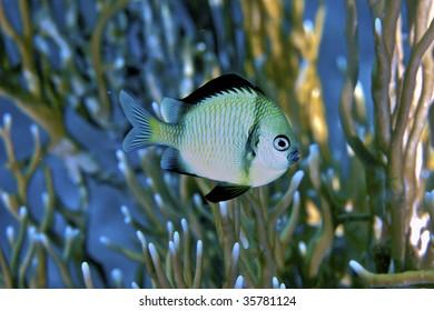 pretty fish closeup