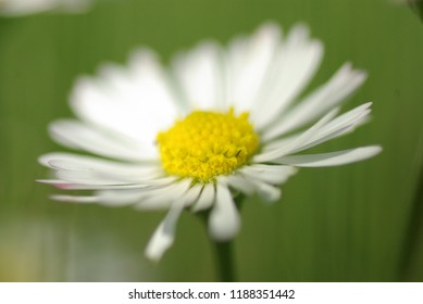 Pretty Flower standing all alone