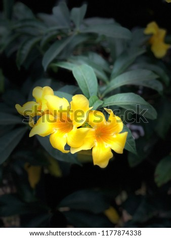 Pretty Flowers On Black Background Stock Photo Edit Now 1177874338